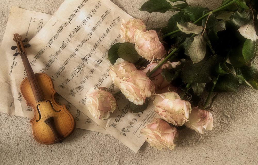 violin-2946996_1280